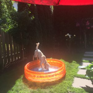 norm in the kiddie pool